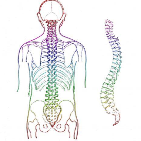 spine-257870(1)
